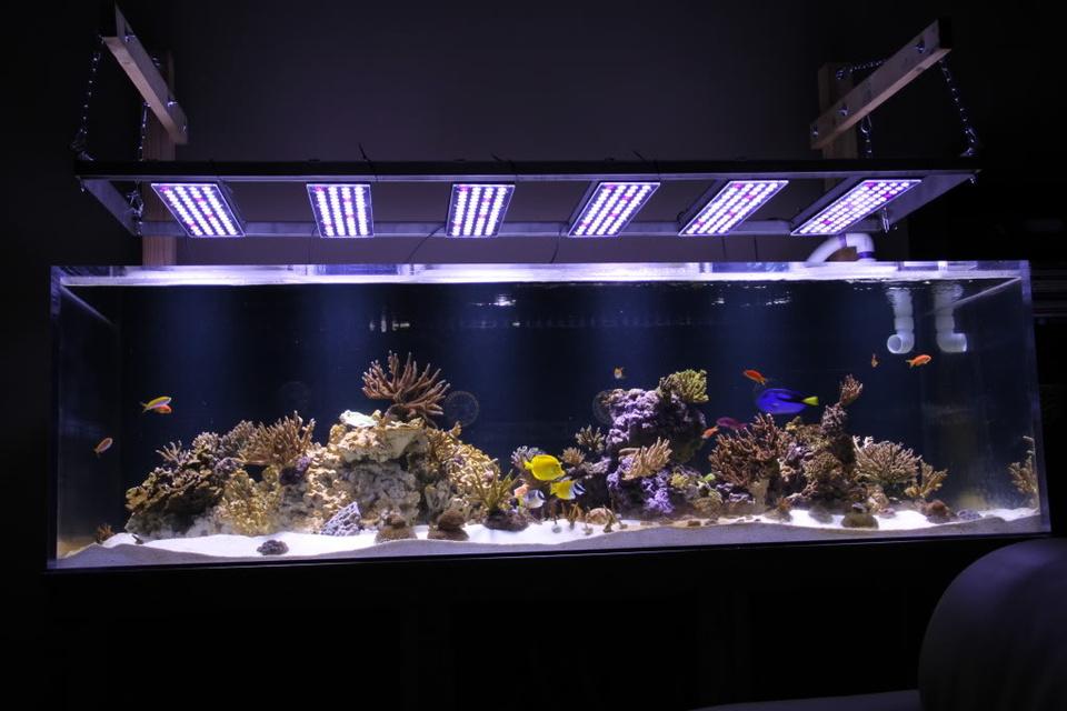 лед освещение для аквариума 200 литров своими руками
