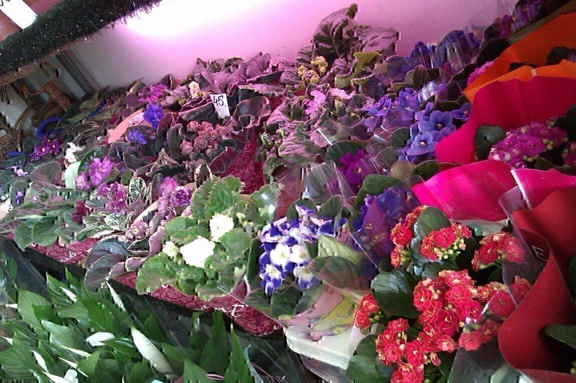 Дом, магазины цветов в г. уфа, орхидеи
