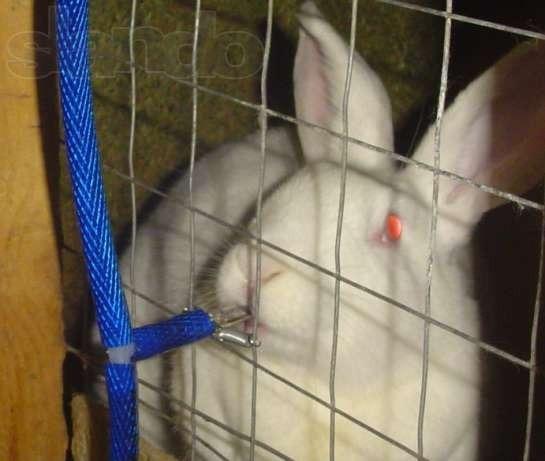 Как построить поилку для кроликов