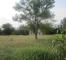 Stina de oi cu casa, beci 25 km de la Chisinau