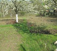Продаётся земельный участок в селе Кошерница