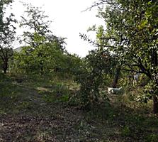 Продаю участок 6 соток, пригород Кишинева.