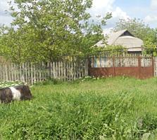Se vinde casa în centru satului -12 km de la Anenii -37 km Chișinău