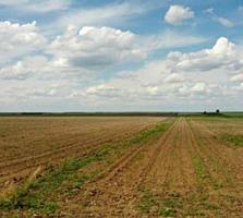 Lot de teren agricol 18arii, Băcioi, situat la 2km de la sectorul Botani