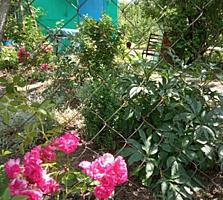 Дача в Цынцаренах с летним домиком