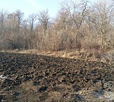 URGENT!!! Se vinde lot de pământ lângă pădure!