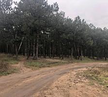 Продам Участок возле Леса, пгт Воскресенское (10 соток)