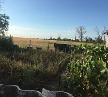 Продается ферма с частным домом, техникой и живностью в г. Слободзея