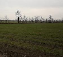 Фасадный участок 80 соток. Г/ак. Близко Черноморка.
