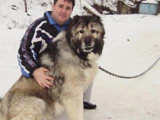 Корм для собак-12,50 л/кг. КИШИНЕВ 0 695 93 483; КОМРАТ 0 799 344 59.