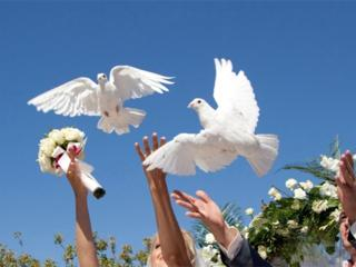 Белые голуби для торжеств! 40руб. Выпускникам дешевле!
