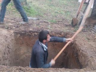 Вырубка и распил деревьев. По доступным ценам.