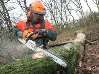 Вырубка старых больших деревьев! Любая сложность возле крыш и проводов