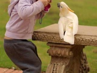 Красивые Попугайчики! Добрым, Заботливым Людям!