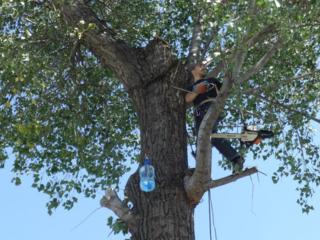 Aрборист! Распиловка деревьев в труднодоступных местах!