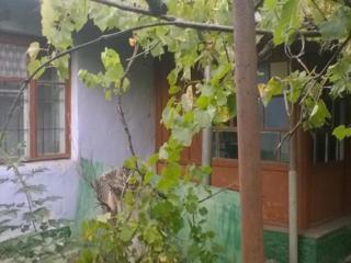 Продается дом в с. Красненькое