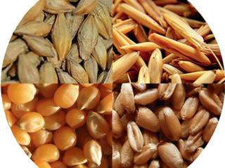 Пшеница. Кукуруза. Ячмень. Комбикорм. Солома ячм. Гранулы для кроликов