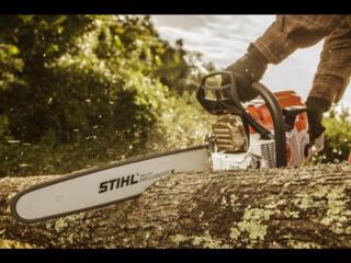 Tăiem copaci deteriorați sau uscați