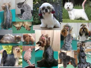 Стрижка собак и кошек(груминг) от 150 руб. - все фото Мои