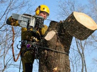 Пилю дрова! Распиловка дров и деревьев! Бензопилой! Колка дров.