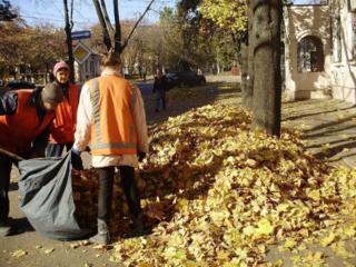 Вывоз листьев, веток!!!