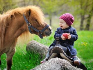 Лошади и пони на выездных мероприятиях. Фотосессии с лошадьми и пони.