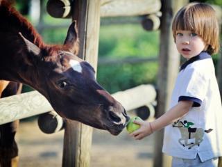 Спешите порадовать детей и себя катанием на лошадях и милых пони.