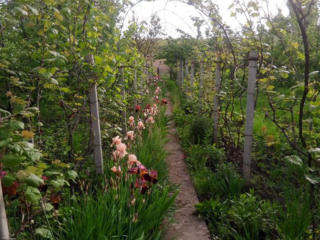 Дача, Дом с садом и Виноградником