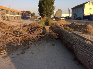 Taierea lemnelor la domiciliu, aranjarea spatiilor verzi, lucru cu visca