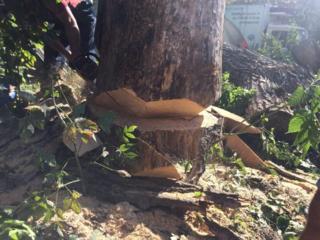Taierea copacilor cu un grad inalt de dificultate, Autoturn, Cran