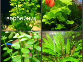 Продам очень большое количество аквариумных растений