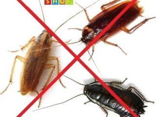 Борьба с тараканами, клопами, блохами. 100% результат!