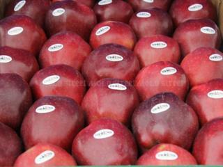 Таможенное оформление фруктов и овощей. Услуги сертификации товаров.