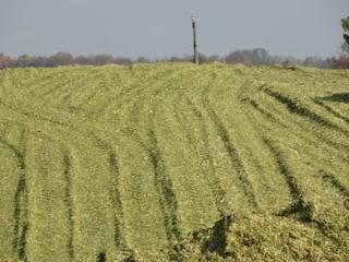 Оказываем услуги по уборке люцерны, кукурузы на силос, сенаж, сено.
