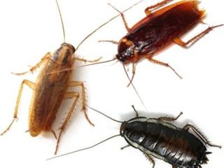 Уничтожение тараканов и клопов