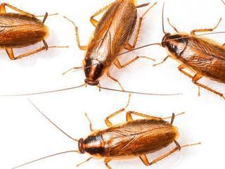 Уничтожение тараканов и клопов! Гарантия 100%