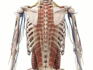 Укрепить и разработать труднодоступные мелкие мышцы и связки позвоноч.