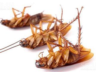 Уничтожение тараканов и клопов. Гарантия 100%