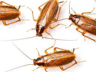 Дезинсекция. Уничтожение тараканов и клопов. Гарантия 100%