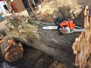 Servicii de taiere, toaletare si doborare sau defrisare copaci uscati,