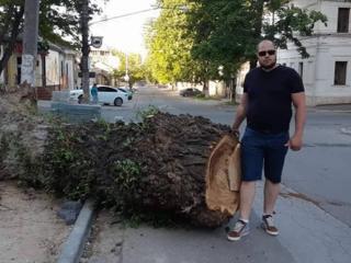 Tăierea copacilor înclinați-deteriorați, lucrari la inaltime -Autoturn