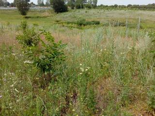 Vind urgent 35 ha, Poltava Ialoveni