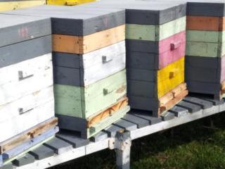 Продаются пчелиные семьи