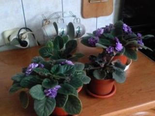 Продаём комнатные растения разных высот! Есть фото!