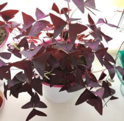 Flori de camera si oficiu(birou)/Комнатные растения для офиса и дома!