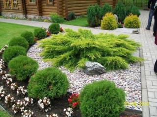 Plante decorative pentru gradina de la producator