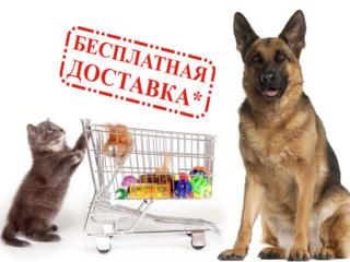 Сухой корм для собак Brit с бесплатной доставкой на дом!!!