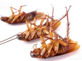 Дезинсекция. Капитальная обработка от тараканов и клопов