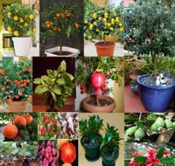 Продам саженцы экзотических растений.