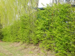 Садовник---живые изгороди